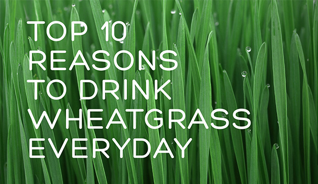 Have you heard of wheatgrass?